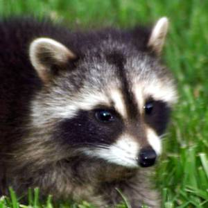 how to get rid of raccoon eyes